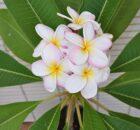 bloemen bij gedicht 693
